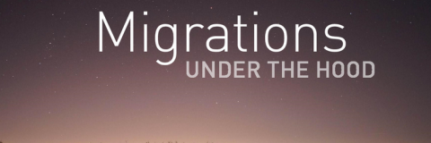 Migrations, under the hood