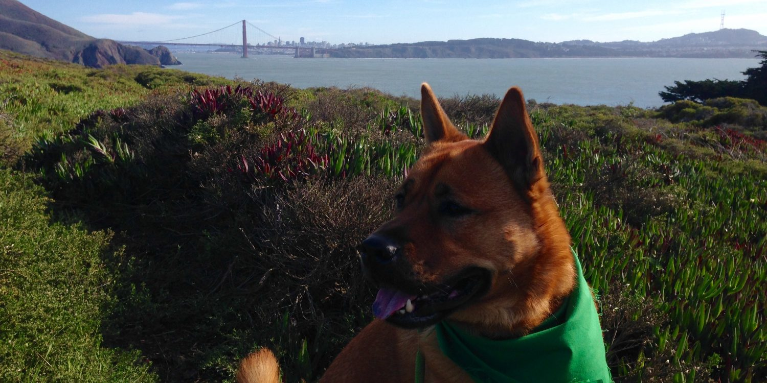 7 Beautiful Dog-Friendly Hikes in the Bay Area