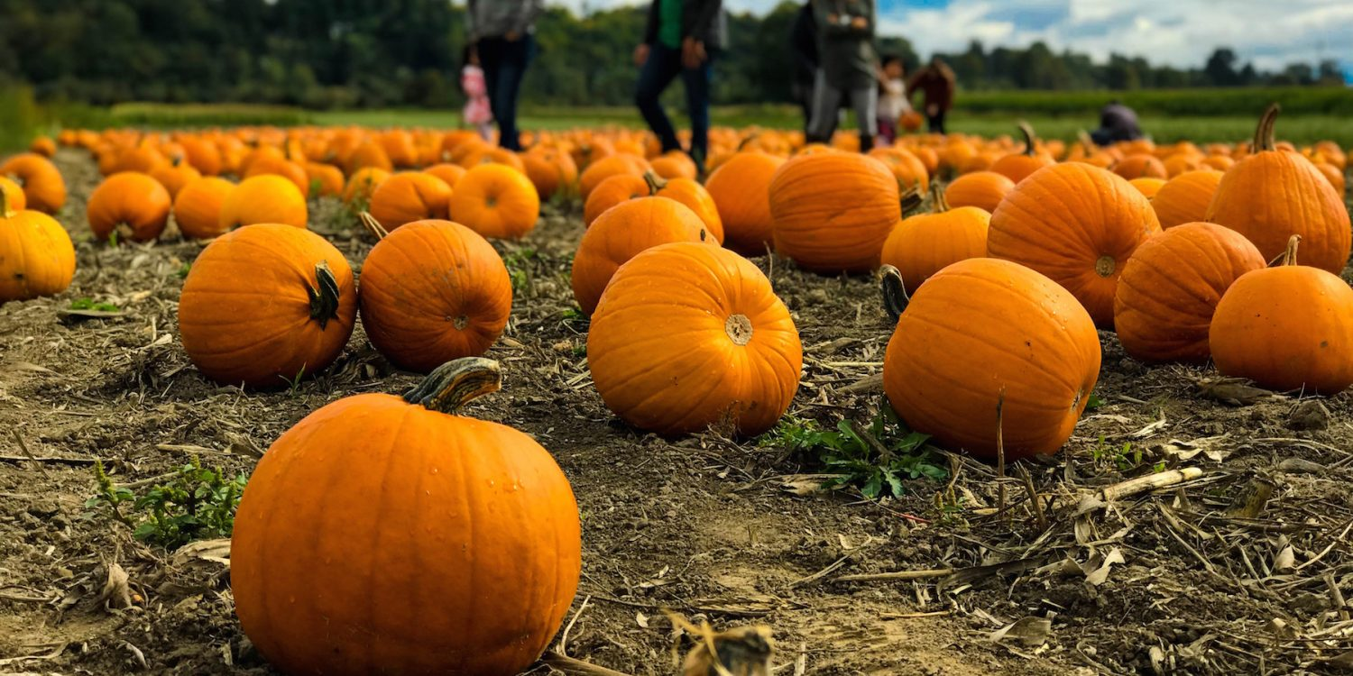 The Best Pumpkin Patches and Corn Mazes in the Bay Area
