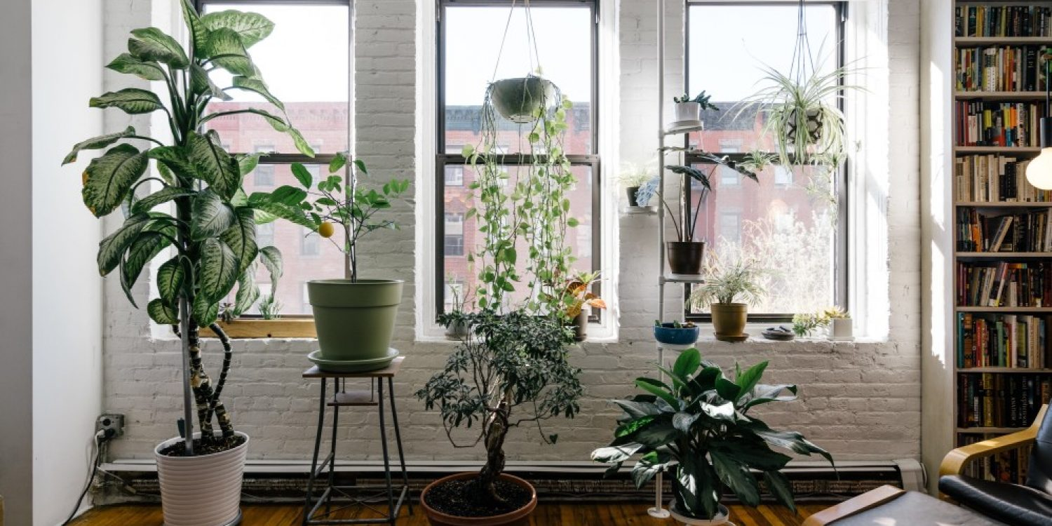 5 Tips for Growing Plants in Your Tiny Apartment - Eventbrite