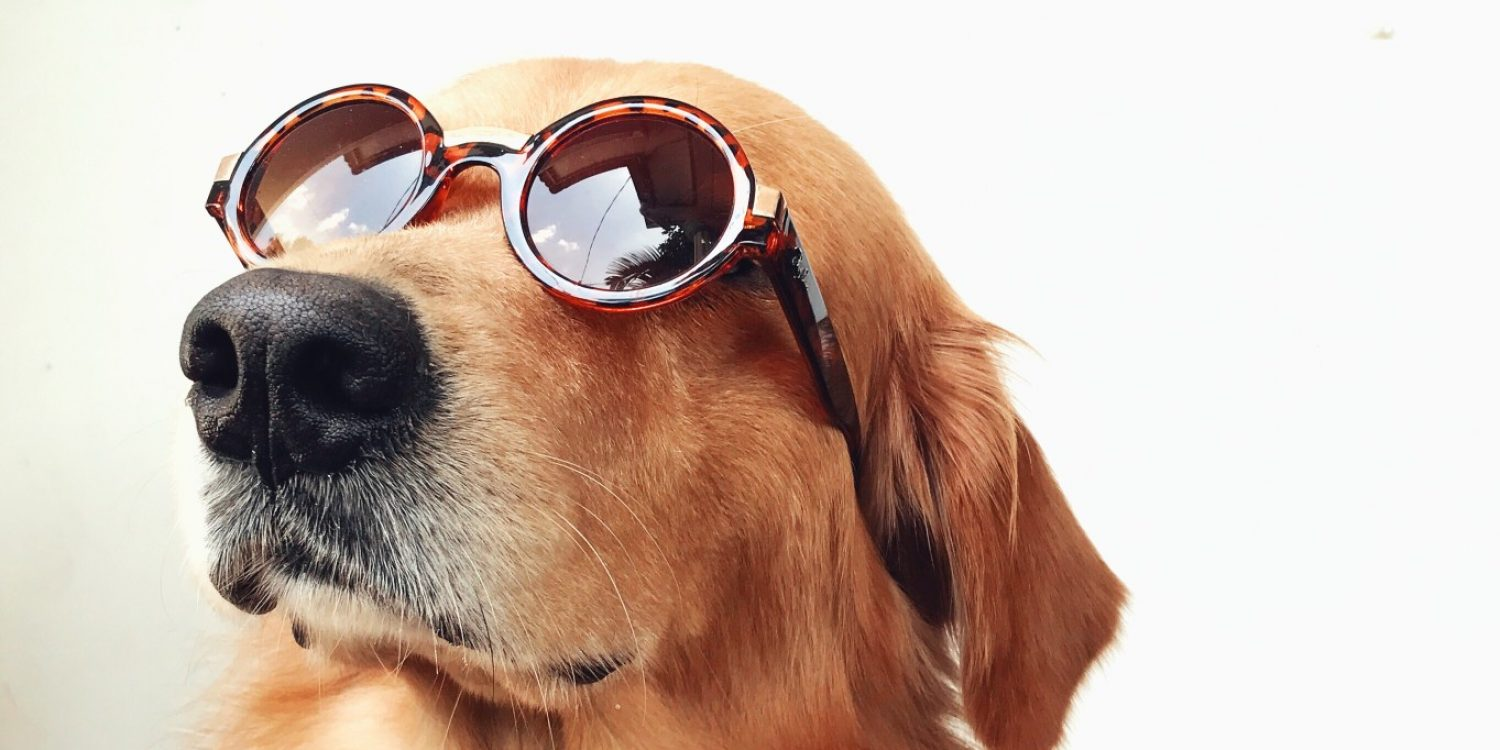 Dog Days of Summer: 12 Dog-Themed Events in DC