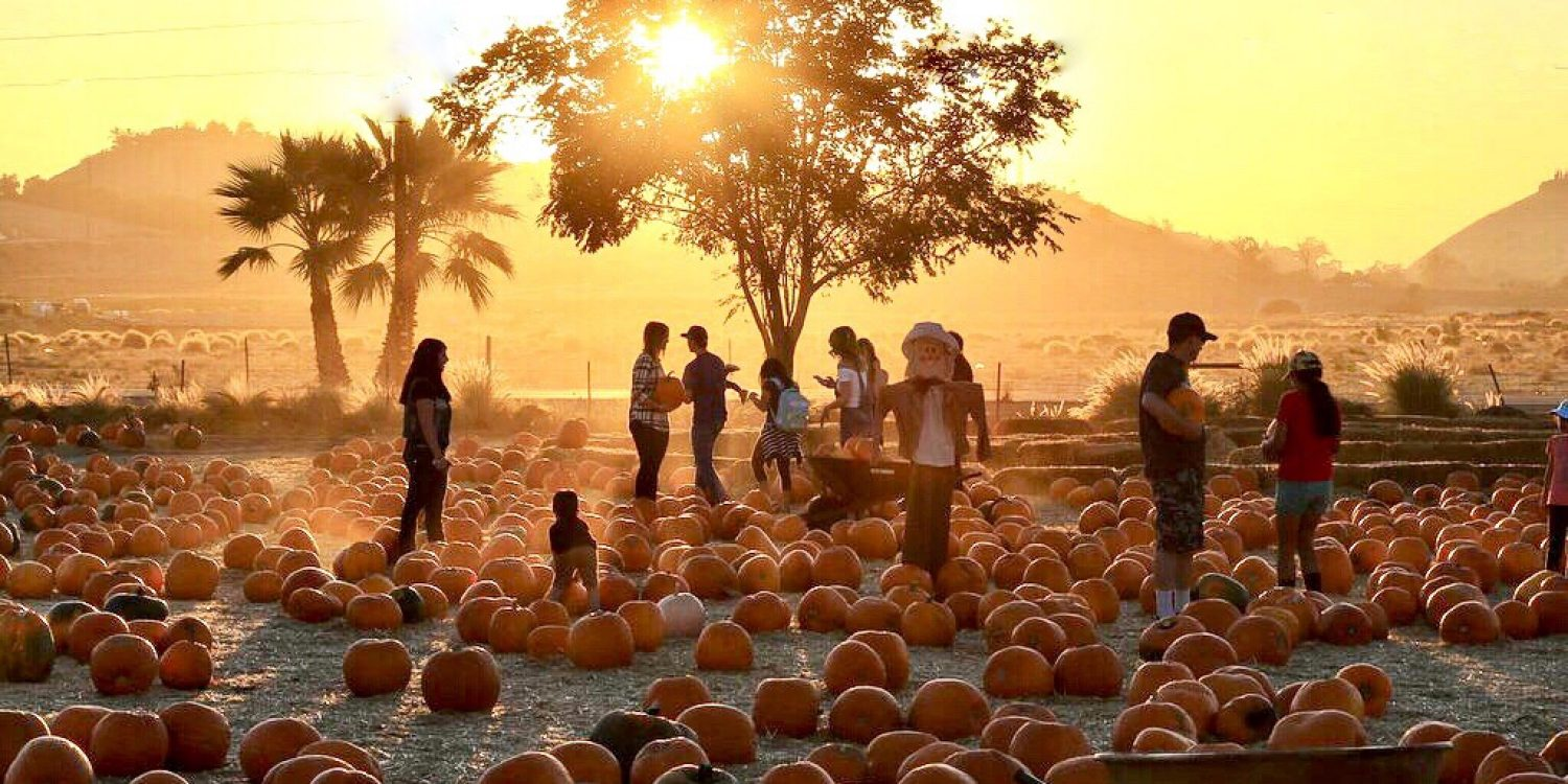 Best Day Ever: Where to Eat and Drink After Pumpkin Picking Near SF