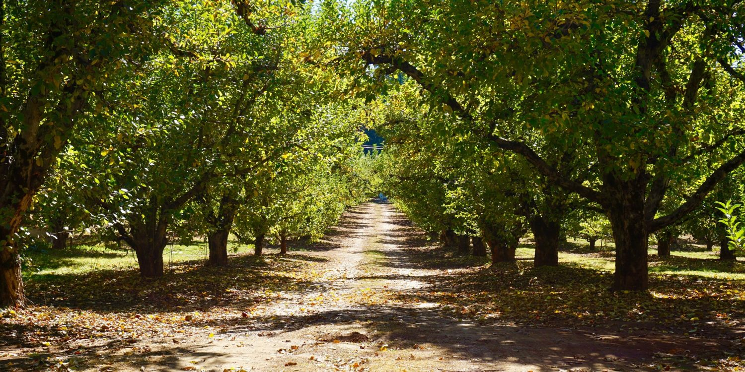 The 8 Best Places to Go Apple Picking Near LA This Fall
