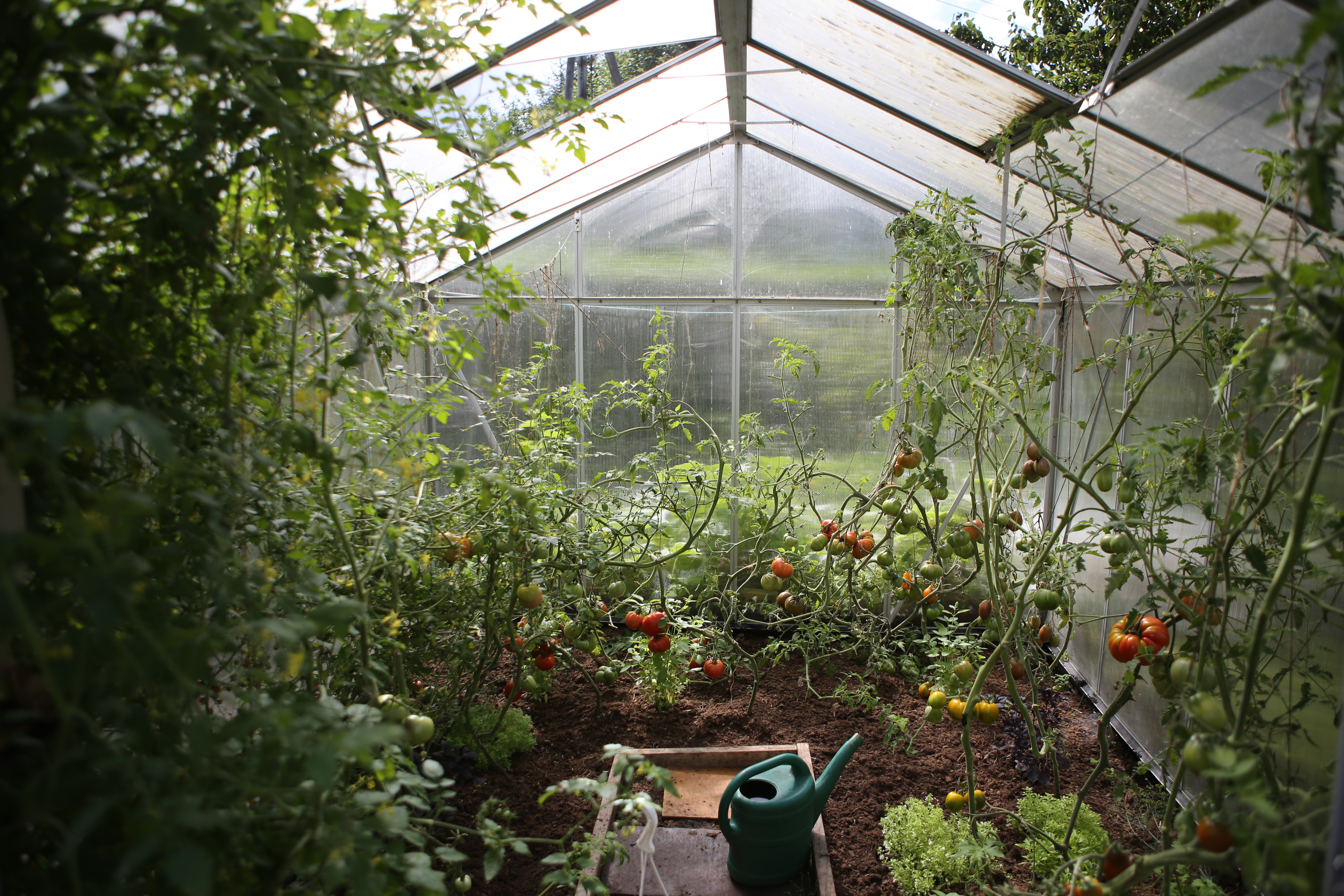 Image of a greenhouse with vegetables