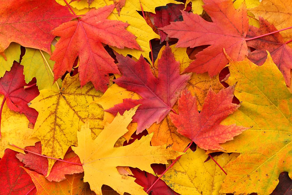 autumn colour schemes